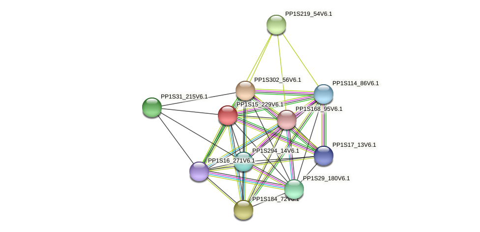 PP1S15_229V6.1 protein (Physcomitrella patens) - STRING interaction network
