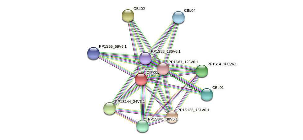 CIPK01 protein (Physcomitrella patens) - STRING interaction network