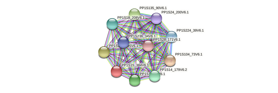 PP1S15_384V6.1 protein (Physcomitrella patens) - STRING interaction network