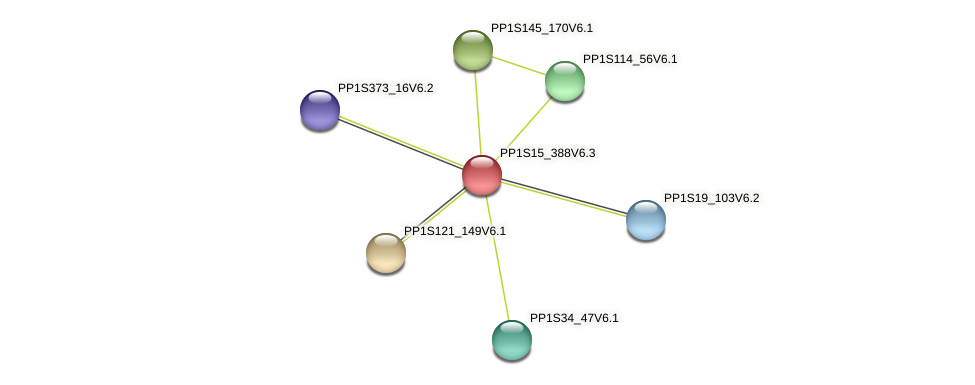 PP1S15_388V6.1 protein (Physcomitrella patens) - STRING interaction network