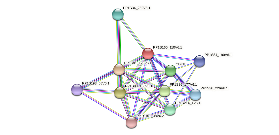 PP1S160_110V6.1 protein (Physcomitrella patens) - STRING interaction network