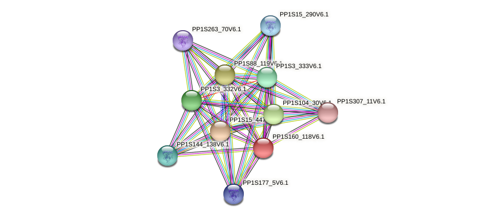 PP1S160_118V6.1 protein (Physcomitrella patens) - STRING interaction network
