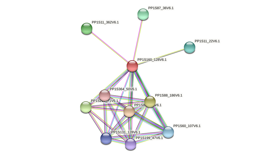 PP1S160_128V6.1 protein (Physcomitrella patens) - STRING interaction network