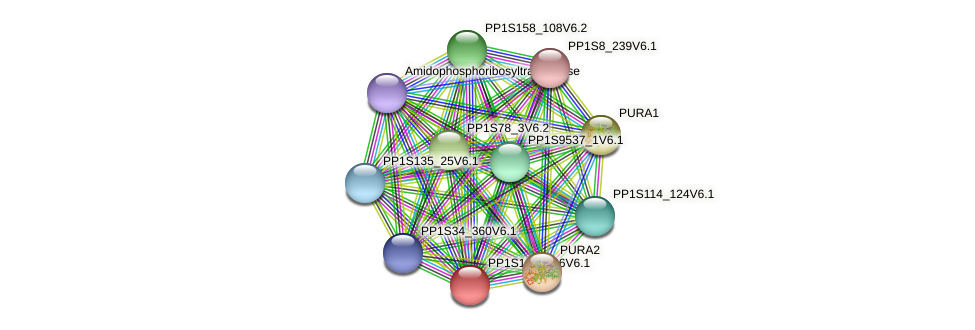 PP1S160_136V6.1 protein (Physcomitrella patens) - STRING interaction network