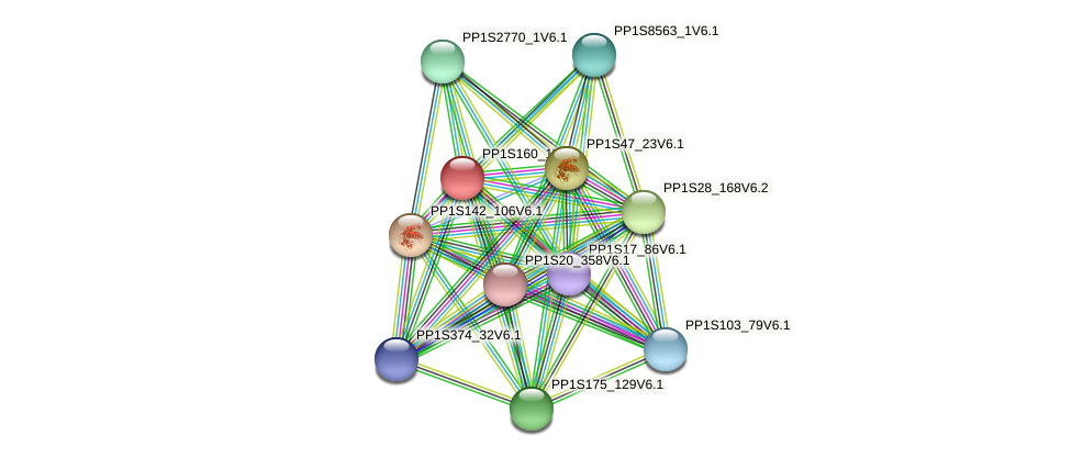 PP1S160_1V6.1 protein (Physcomitrella patens) - STRING interaction network