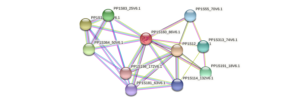 PP1S160_86V6.1 protein (Physcomitrella patens) - STRING interaction network