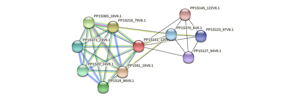 PP1S161_120V6.1 protein (Physcomitrella patens) - STRING interaction network