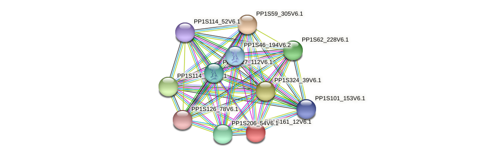 PP1S161_12V6.1 protein (Physcomitrella patens) - STRING interaction network