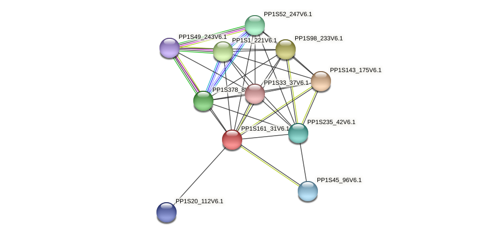 PP1S161_31V6.1 protein (Physcomitrella patens) - STRING interaction network