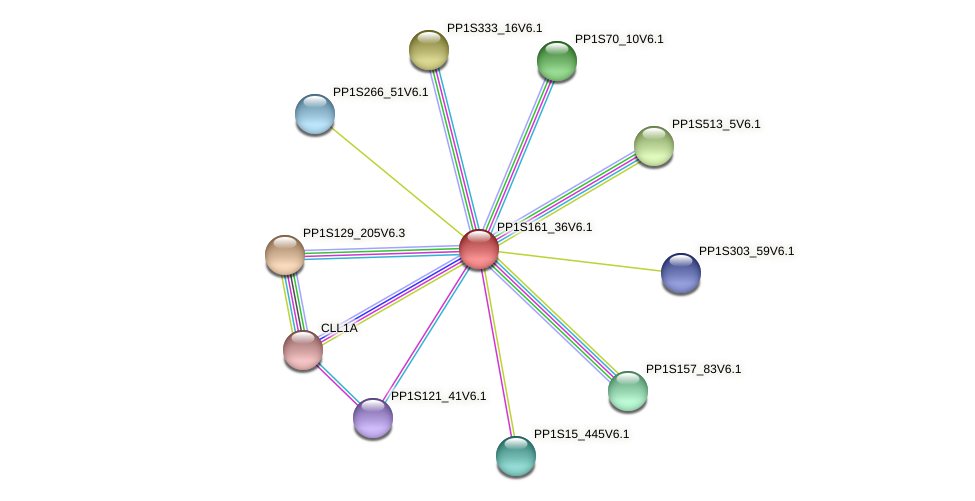 PP1S161_36V6.1 protein (Physcomitrella patens) - STRING interaction network