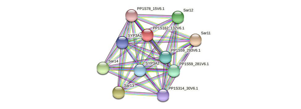 PP1S162_132V6.1 protein (Physcomitrella patens) - STRING interaction network