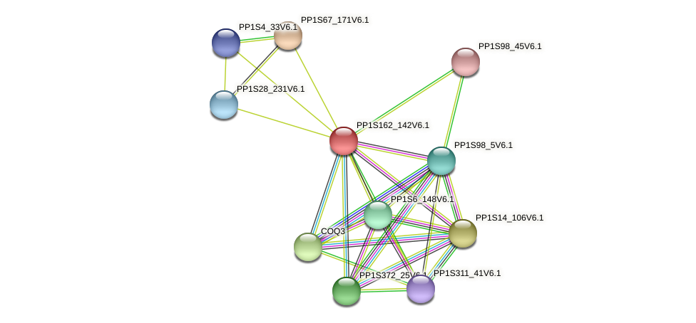 PP1S162_142V6.1 protein (Physcomitrella patens) - STRING interaction network