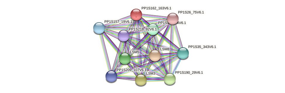 PP1S162_163V6.1 protein (Physcomitrella patens) - STRING interaction network