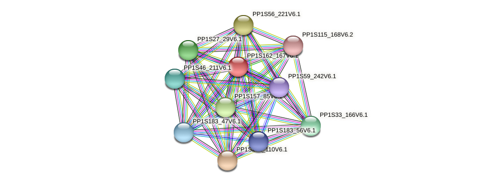 PP1S162_167V6.1 protein (Physcomitrella patens) - STRING interaction network