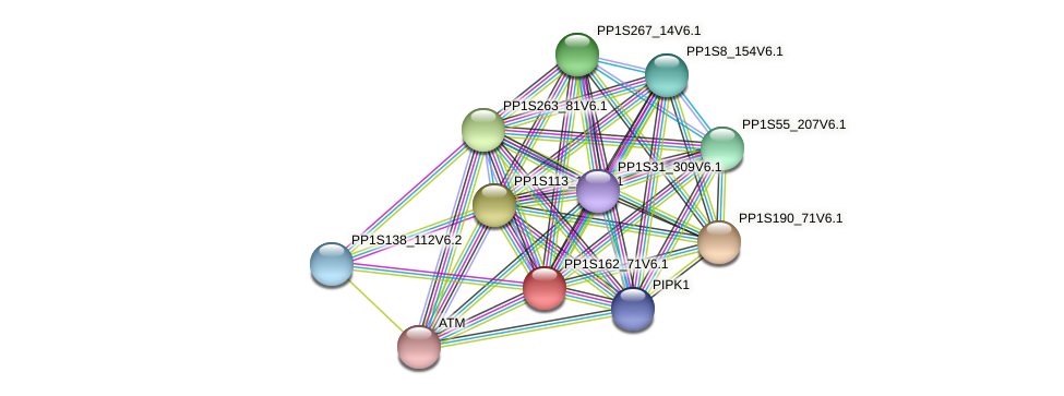 PP1S162_71V6.1 protein (Physcomitrella patens) - STRING interaction network
