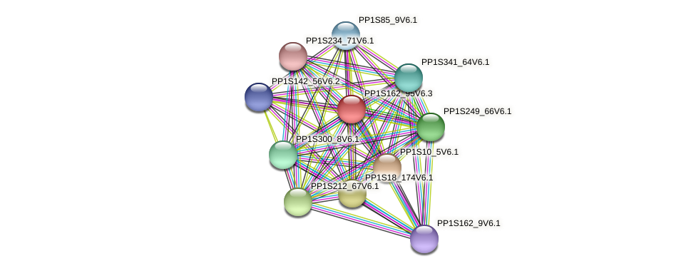 PP1S162_95V6.1 protein (Physcomitrella patens) - STRING interaction network