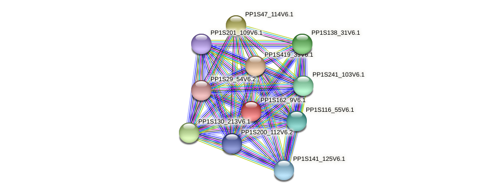PP1S162_9V6.1 protein (Physcomitrella patens) - STRING interaction network