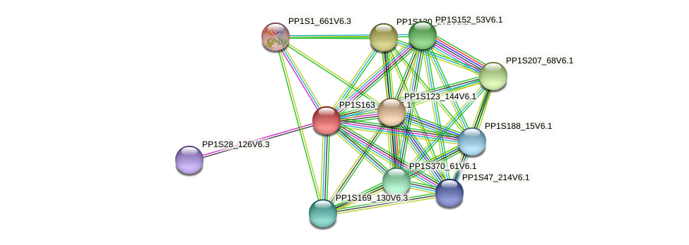 PP1S163_127V6.1 protein (Physcomitrella patens) - STRING interaction network