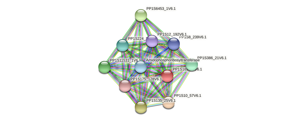 PP1S163_42V6.1 protein (Physcomitrella patens) - STRING interaction network