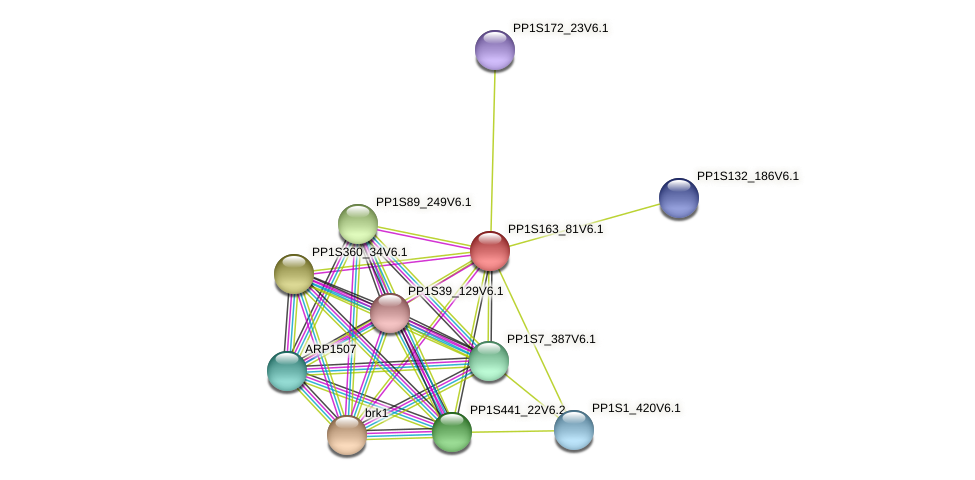 PP1S163_81V6.1 protein (Physcomitrella patens) - STRING interaction network