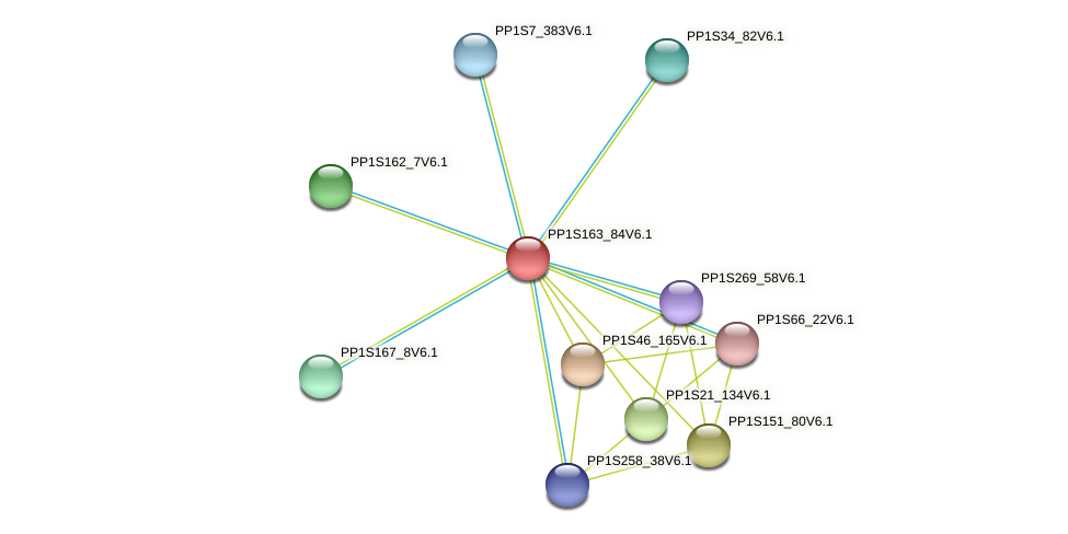 PP1S163_84V6.1 protein (Physcomitrella patens) - STRING interaction network