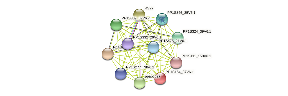 PP1S164_37V6.1 protein (Physcomitrella patens) - STRING interaction network