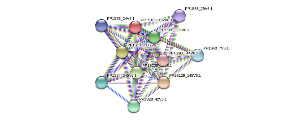 PP1S165_132V6.1 protein (Physcomitrella patens) - STRING interaction network