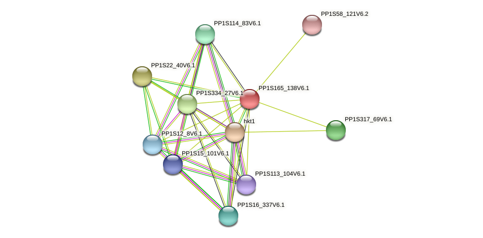 PP1S165_138V6.1 protein (Physcomitrella patens) - STRING interaction network