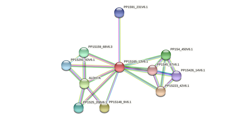 PP1S165_13V6.1 protein (Physcomitrella patens) - STRING interaction network
