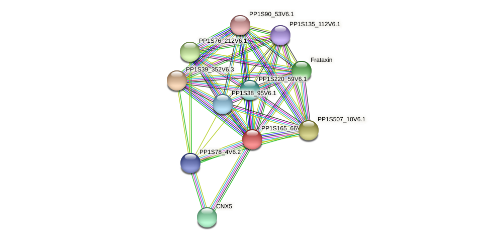 PP1S165_66V6.1 protein (Physcomitrella patens) - STRING interaction network