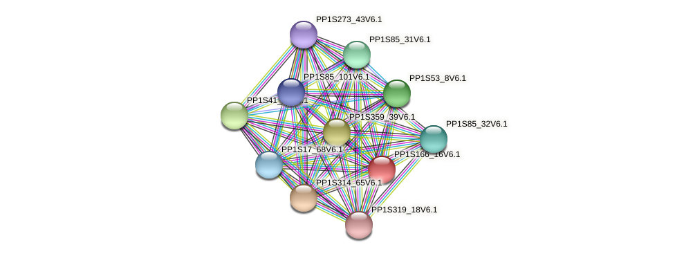 PP1S166_16V6.1 protein (Physcomitrella patens) - STRING interaction network