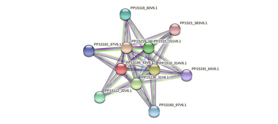 PP1S166_43V6.1 protein (Physcomitrella patens) - STRING interaction network