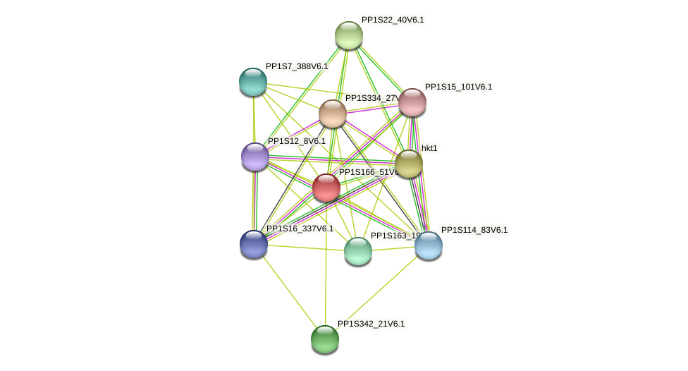 PP1S166_51V6.1 protein (Physcomitrella patens) - STRING interaction network