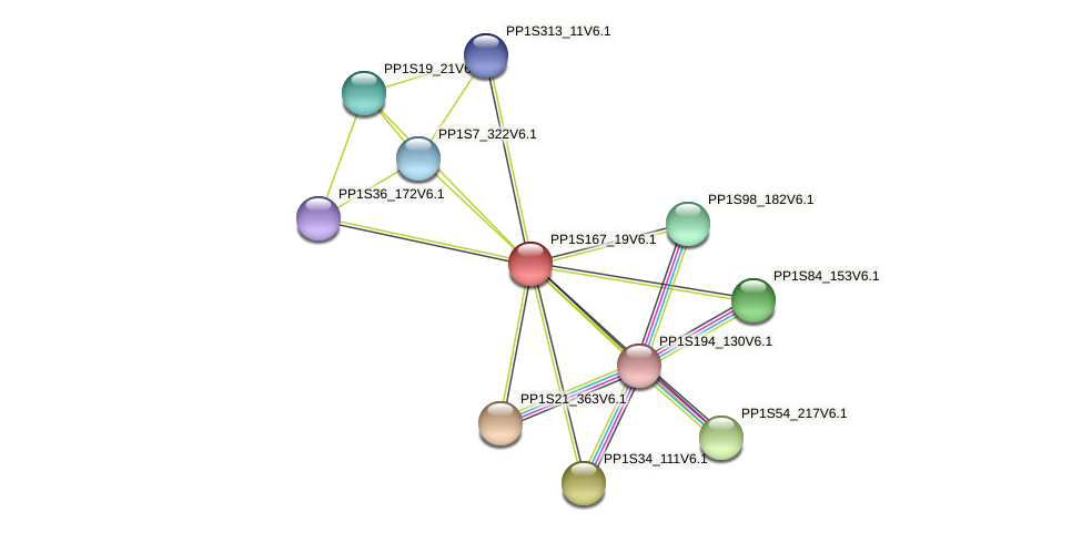 PP1S167_19V6.1 protein (Physcomitrella patens) - STRING interaction network