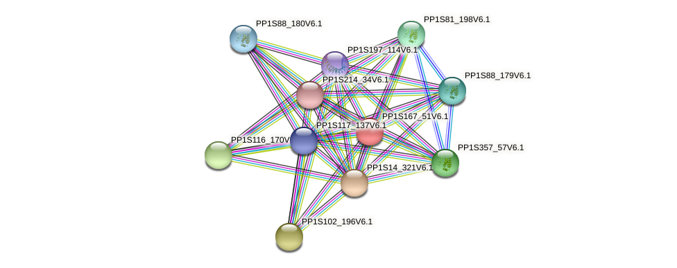 PP1S167_51V6.1 protein (Physcomitrella patens) - STRING interaction network