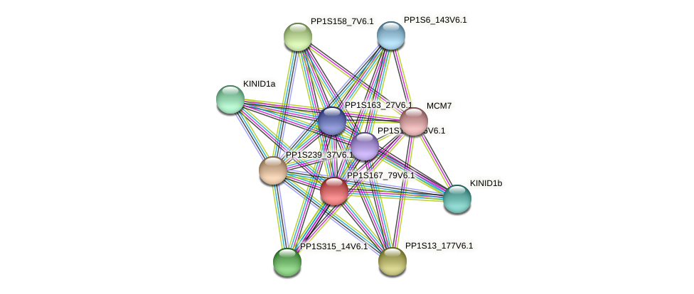 PP1S167_79V6.1 protein (Physcomitrella patens) - STRING interaction network