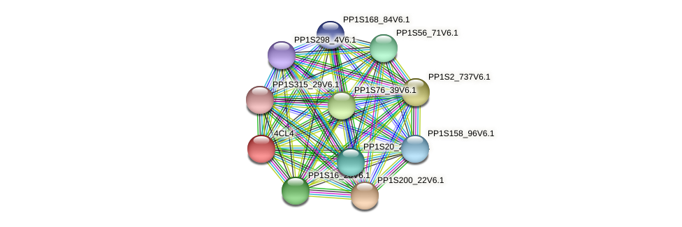 PP1S167_96V6.1 protein (Physcomitrella patens) - STRING interaction network