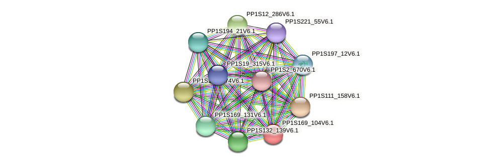 PP1S169_104V6.1 protein (Physcomitrella patens) - STRING interaction network