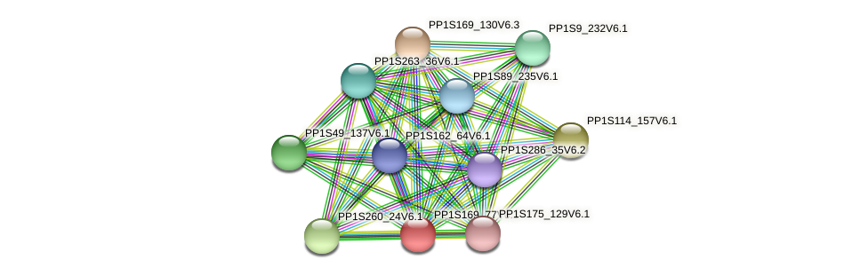 PP1S169_77V6.1 protein (Physcomitrella patens) - STRING interaction network