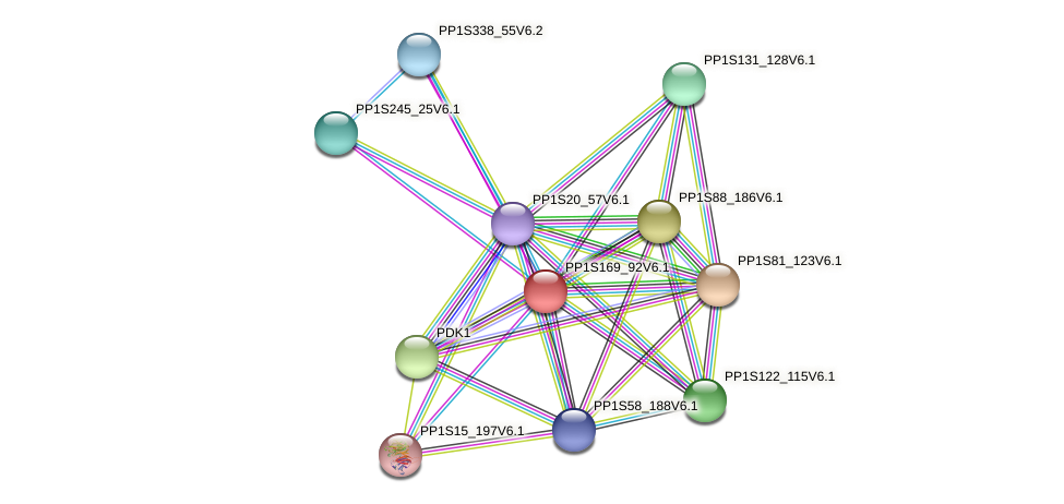 PP1S169_92V6.1 protein (Physcomitrella patens) - STRING interaction network