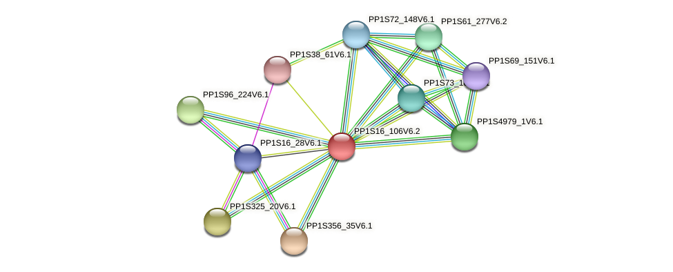 PP1S16_106V6.2 protein (Physcomitrella patens) - STRING interaction network