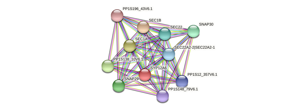 SYP12A6 protein (Physcomitrella patens) - STRING interaction network