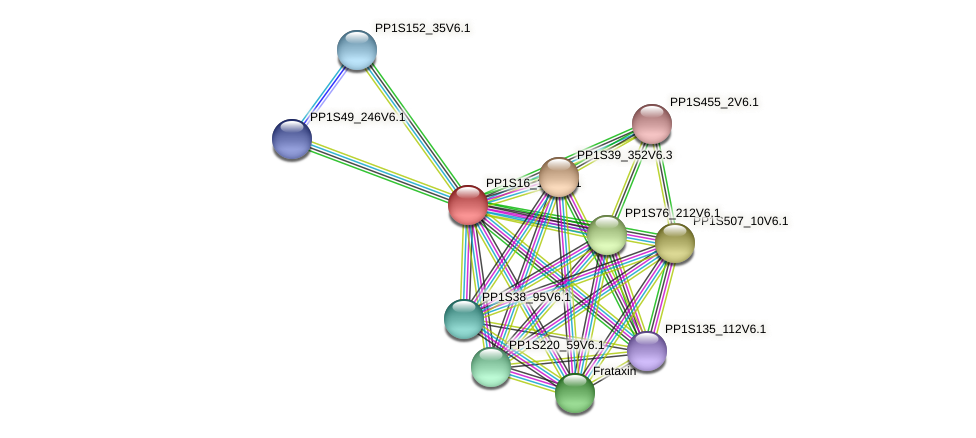PP1S16_130V6.1 protein (Physcomitrella patens) - STRING interaction network