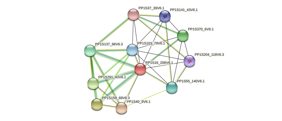 PP1S16_206V6.1 protein (Physcomitrella patens) - STRING interaction network