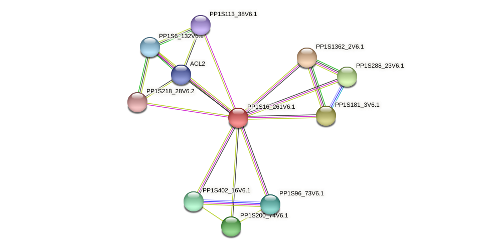 PP1S16_261V6.1 protein (Physcomitrella patens) - STRING interaction network
