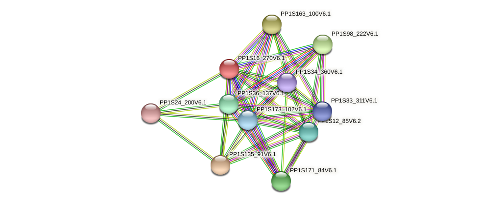 PP1S16_270V6.1 protein (Physcomitrella patens) - STRING interaction network