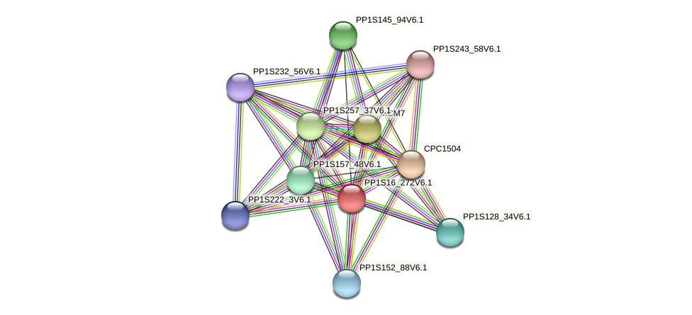 PP1S16_272V6.1 protein (Physcomitrella patens) - STRING interaction network