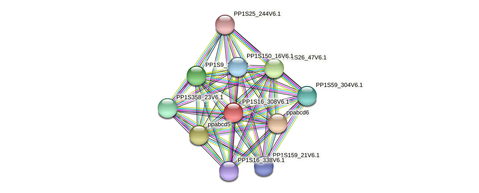 PP1S16_308V6.1 protein (Physcomitrella patens) - STRING interaction network