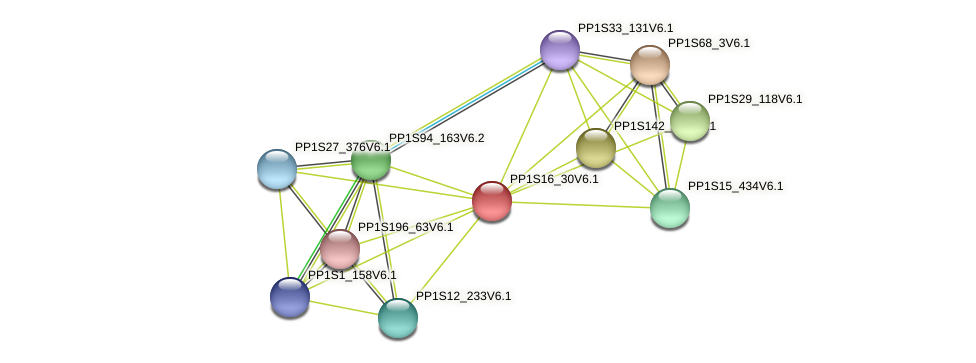 PP1S16_30V6.1 protein (Physcomitrella patens) - STRING interaction network
