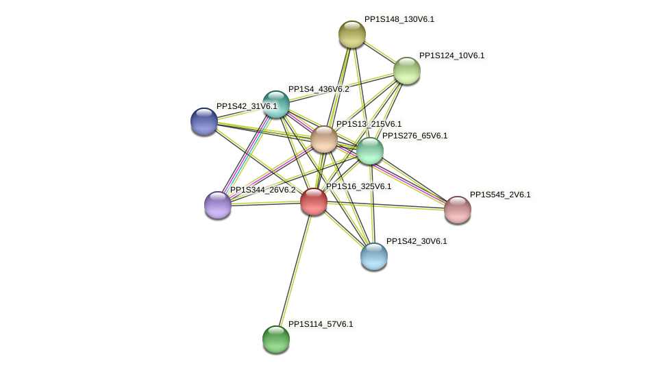 PP1S16_325V6.1 protein (Physcomitrella patens) - STRING interaction network